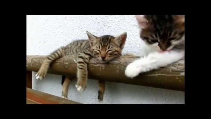 Gato tenta acordar irmão dorminhoco.