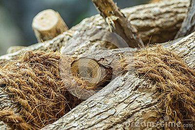 Wood tied with hemp rope