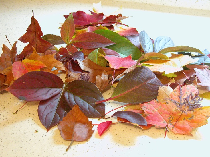 One of my favorite memories as a child, gathering fall leaves with my Mom and preserving them:)