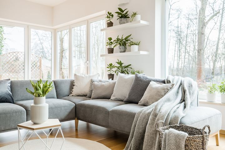 Plants Can Add More Than Just Decoration To A Room They Can Improve Your Quality Of Li Simple Living Room Designs Living Room White Feng Shui Your Living Room #plants #feng #shui #living #room