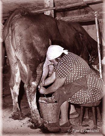 La France paysanne au début du siècle dernier.