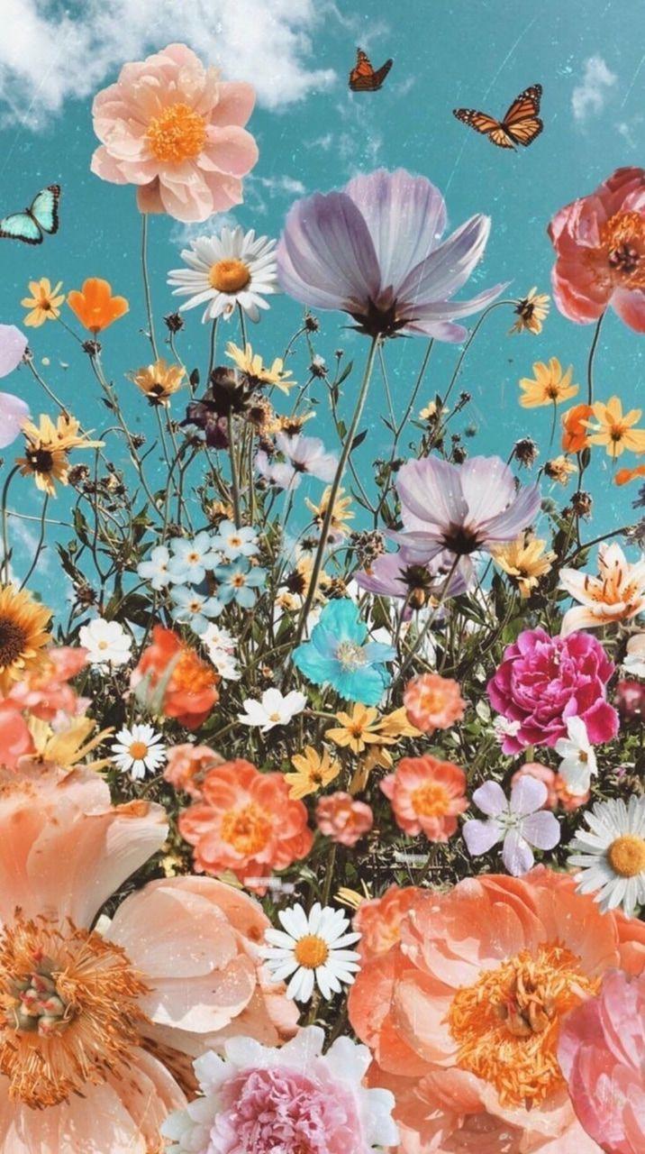 Please Summer Please Stay Beautiful Flower Iphone Wallpaper Wallpaper Summerwallpaper S Flower Iphone Wallpaper Wallpaper Iphone Summer Flower Phone Wallpaper