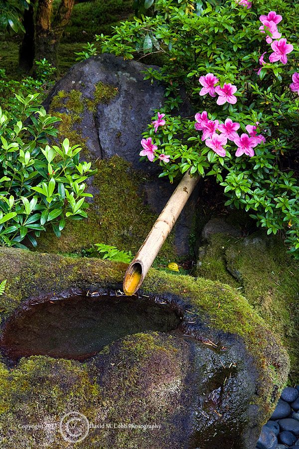 Japanese Zen Garden Water 608 best zen gardens images on pinterest | japanese gardens, zen