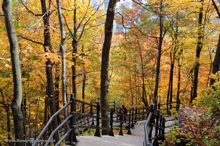 The Fall color at Mont Royal in Montreal, Quebec, Canada