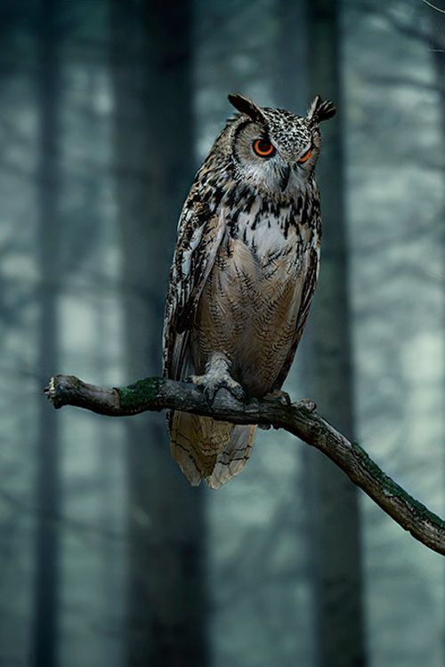 @Rebecca Tierney Johnson beautiful! Great horned owl. My fave.