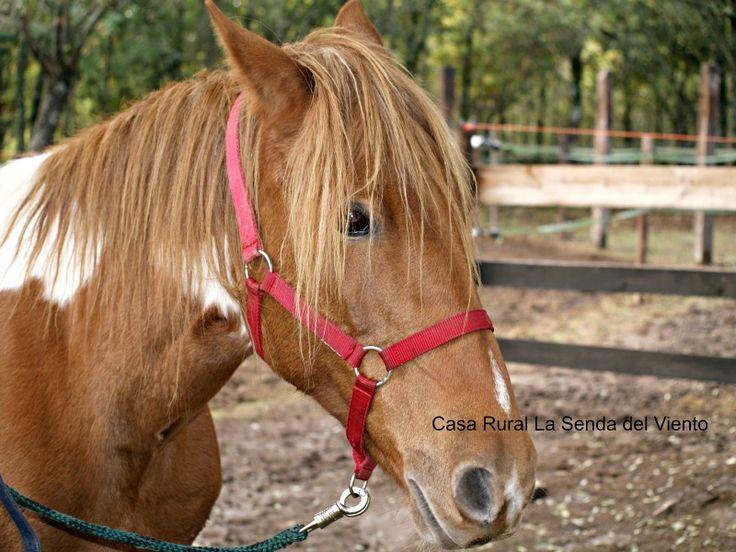 En Bustarviejo también puedes montar a caballo, cuando vengas a visitar La Senda del Viento