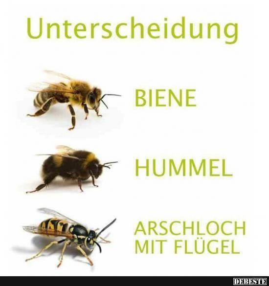 357 best lustige Sprüche und Bilder images on Pinterest ...