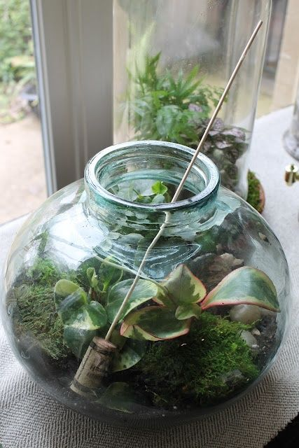 Miss Kopy Kat: Terrarium Tips #Gardening