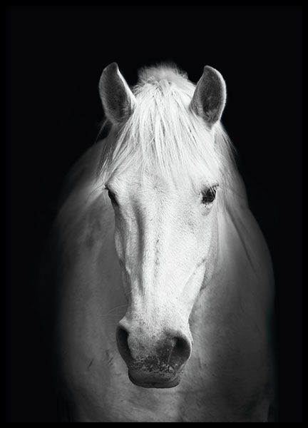 Poster with black and white photo of a horse. In our category Insects and animals as well as black and white, we have more photos of beautiful animals. This photo poster is perfect to combine with other motives in a nice picture wall. www.desenio.com
