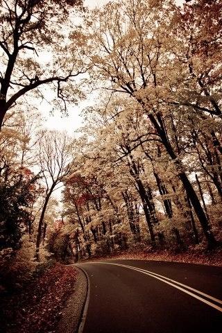 Ma infatti passa, tutto passa.  Dipende, però, come.  Se ti passa, ti sorpassa o ti trapassa.  Cit. da Tumblr: Brown Things, Autumn Fav, The Roads, Beautiful Shades, Outdoor Sanctuary, Things Brown, Beautiful Brown, Outdoor Landscape, Outdoor Curtains