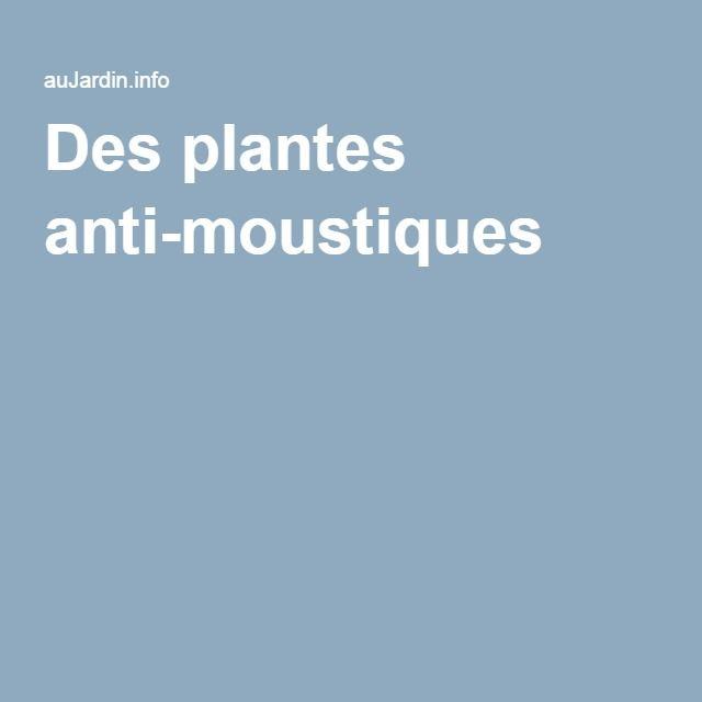 Les 25 meilleures id es de la cat gorie plantes anti for Plante anti moustique naturel