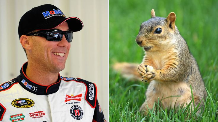 Critter close call: Squirrel almost gets flattened by Kevin Harvick