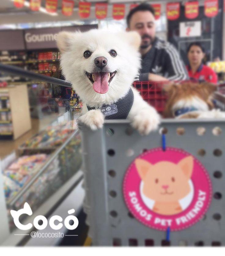 Dog cute dog rescued dog adopted dog travel dog.