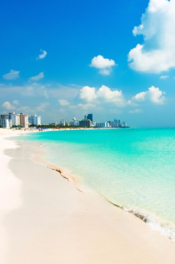 Miami South Beach Local Wildlife: 163 Best Images About Miami, Florida On Pinterest