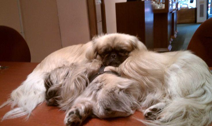 B and P napping at work at DVVS