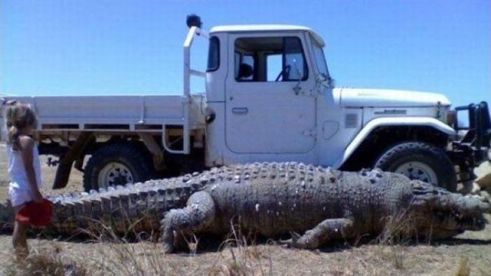23 Aussies Yet To Realise They Live In The Land Of Nope | Meanwhile in australia, Big animals, Australian crocodile