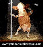 Gambar animasi binatang lucu bergerak, sapi nari striptis :D
