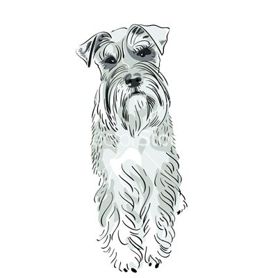Miniature schnauzer dog vector by olgacov - Image #581429 ...