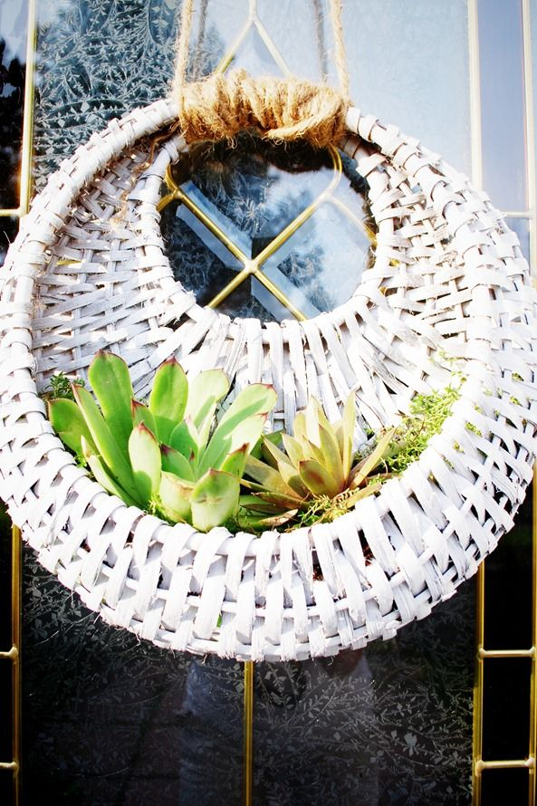 Succulents and moss in a wicker basket. Luverly!