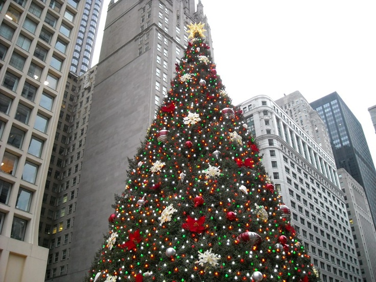 chicago christmas tree - Christmas Trees Chicago