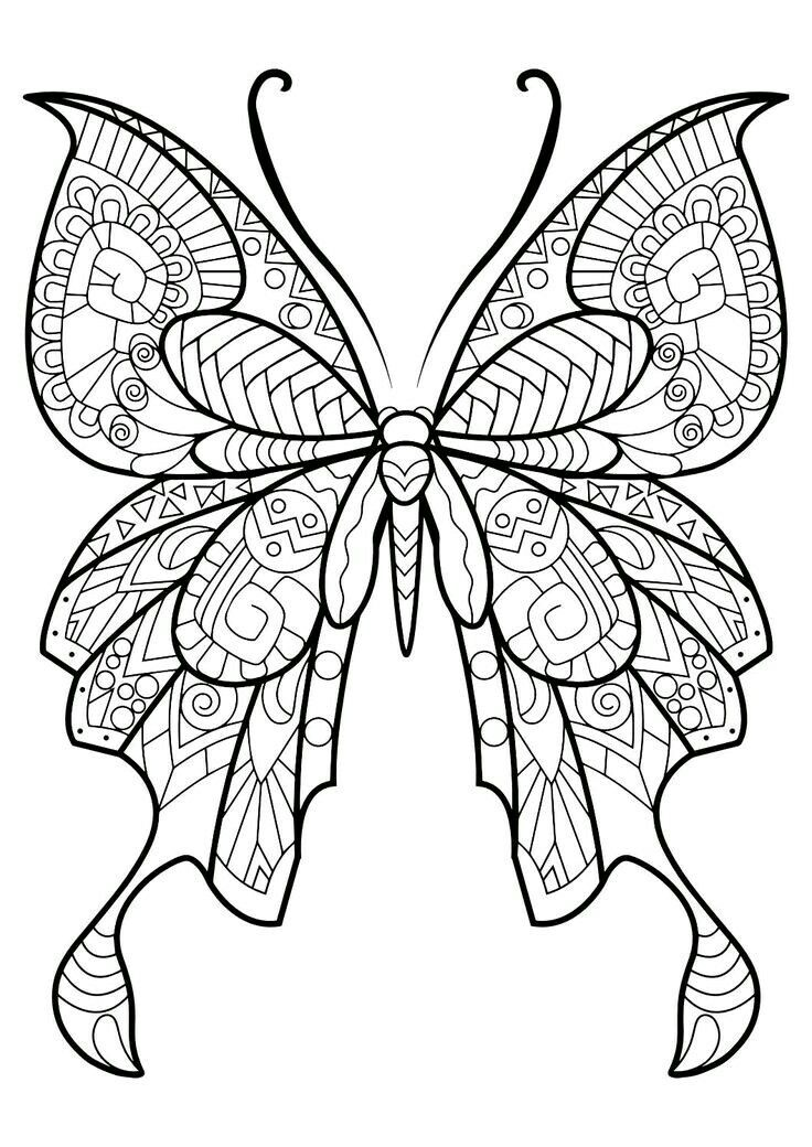 Fantastic Beautiful Butterfly Coloring Image