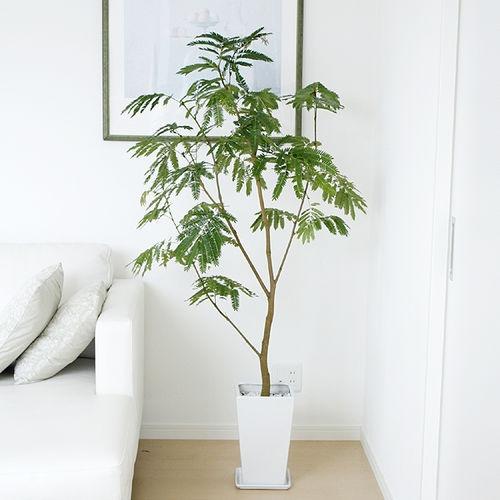 Indoor Home Plants
