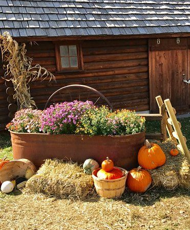 Images of Papa's Pumpkin Patch, Bismarck - Attraction Pictures - TripAdvisor