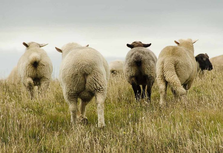 The black sheep aint the one that stands out
