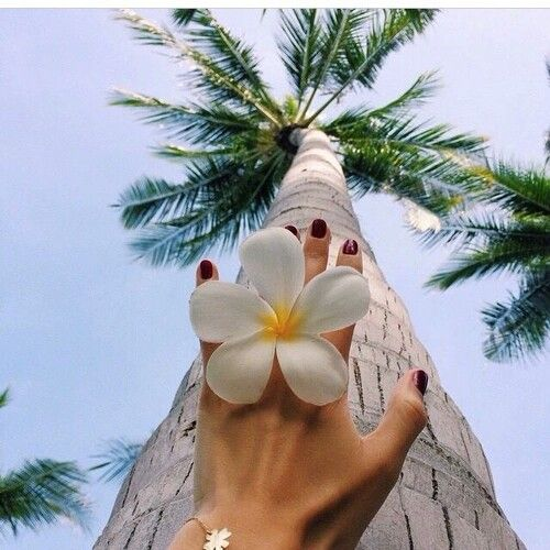 flor e árvore