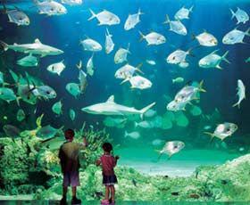 Sydney Aquarium - Darling Harbour