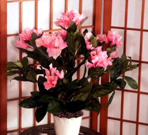 Brighten up any room with this Artificial Rhododendron Bush! Great for placing in niches, end tables; bookshelves, or even the en suite. Makes for a wonderful centerpiece either for indoors or outdoors. Comes potted in a decorative container filled with real moss. Color Pink