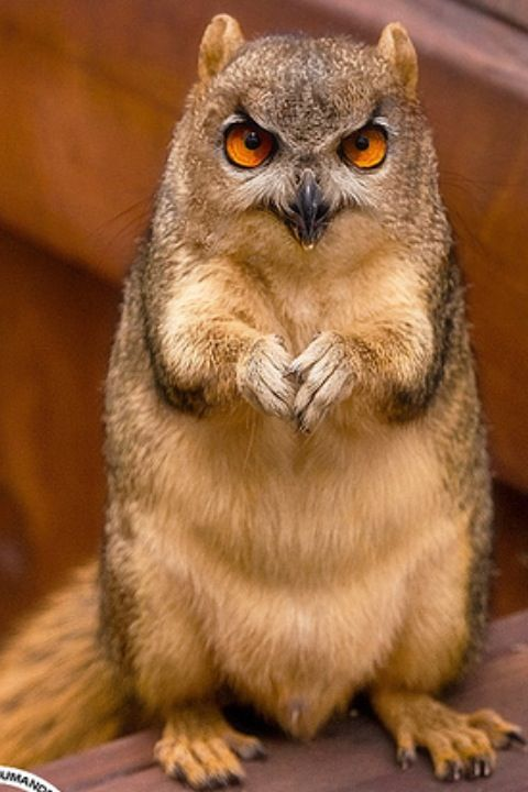 Scary Animals That Are Real 201 best images...