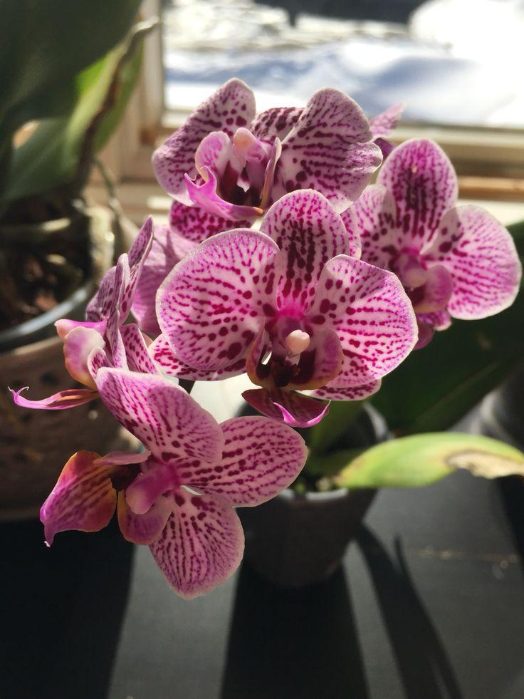 Ellen's orchids