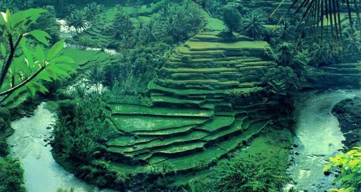 Ayung River with Rice Terraces Background Photo