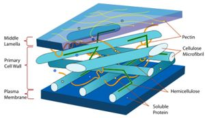 The cell wall is the rigid, semi-permeable protective layer found in some cells.