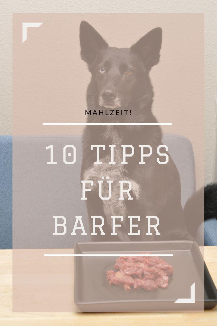 Habt ihr schon einmal von Barfen gehört? Wer sich mit der Ernährung seiner Hunde und Katzen beschäftigt stößt schnell auf den neuen Trend der Rohfütterung. Als Anfänger schwirrt einem bei diesem Thema aber ganz schnell mal der Kopf. Deshalb habe ich mir den Rat einer Barf-Expertin gesucht! Gabriele Tischler hat für uns die 10 wichtigsten Punkte zusammen gefasst!