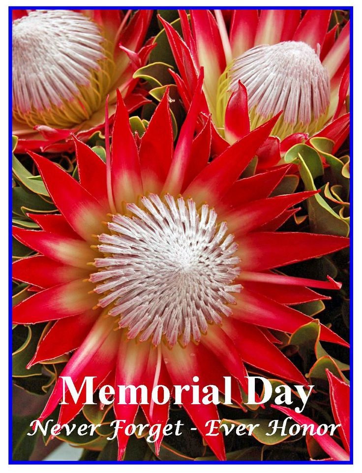 memorial day 2014 colors