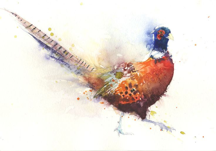 LIMITED EDITON PRINT of original Pheasant watercolour. This jaunty fella would make a great gift for friends or family.