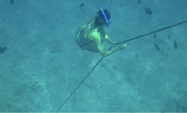 Snorkelling with Lemon Sharks, Bora Bora Tahiti