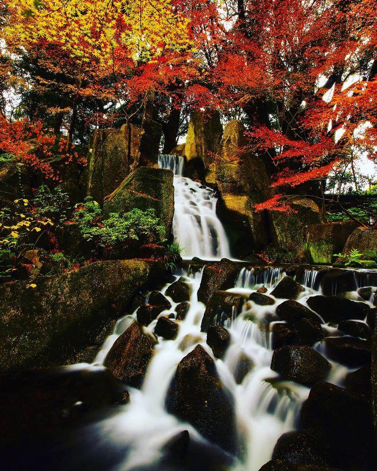 ☆ 徳川園 Nagoya-shi, Japan | Photographer Yuuki Murakami(@youpv):「 location:Tokugawaen(Aichi Pref) 夏に訪れた愛知県名古屋市の徳川園 青もみじが綺麗でしたので、紅葉時に 再訪すると美しい風景が広がりました(^^)… 」