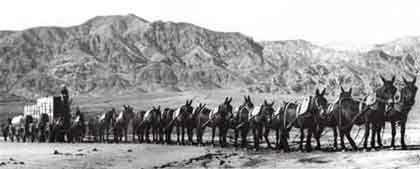 """La reata de las """"20 mulas"""" del Valle de la Muerte (EEUU). """"20 Mule Team"""" Death Valley (USA)."""