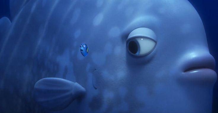 Take a look at the latest trailer of Pixar's Finding Dory film! #ChildrenSMovie, #Disney, #Film, #Pixar