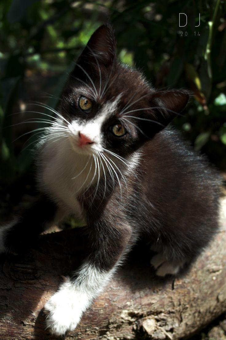 #wild #cat