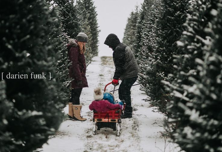 Can I forever do sessions on snowy days in the middle of Christmas tree farms !? i finally got to do a dream session of mine - documenting a family picking out their tree & cutting it down. It was nothing short of amazing! ❄️