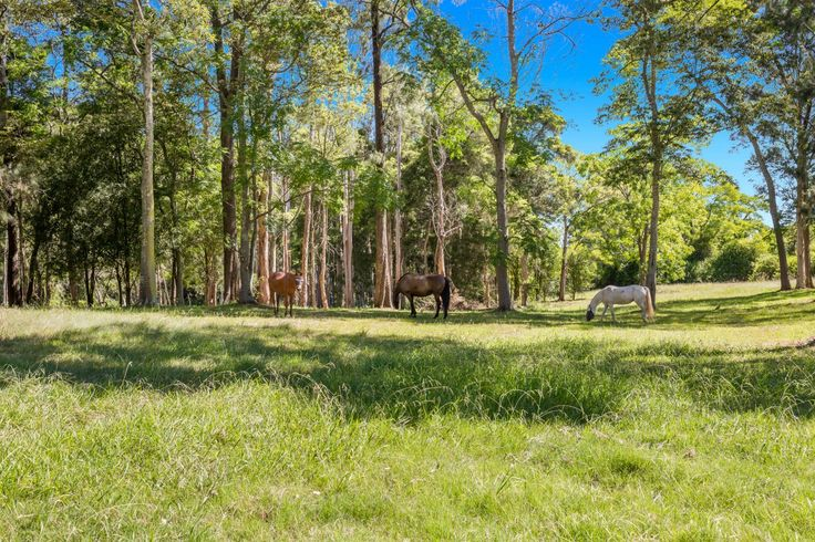 For Sale: Blue Gum Billabong – 33 Acres of Peace & Privacy. See more:   #NewSouthWales #Ebenezer #ForSale #RealEstate #HorseProperty