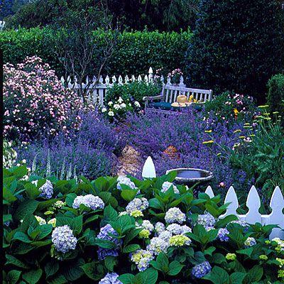 Gorgeous little garden in full bloom!