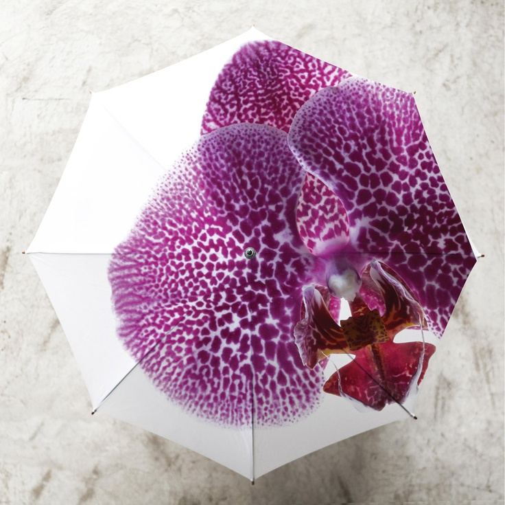 Orchid Umbrella by Clinton Friedman