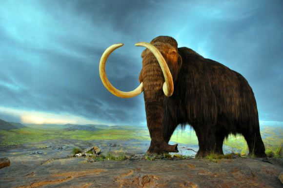 New Study Sheds Light on Evolutionary Biology of Woolly Mammoths. This is an artist's rendition of a woolly mammoth. Image credit: Flying Puffin / CC BY-SA 2.0.
