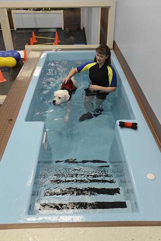 Custom Fiberglass Canine Therapy Pools | Dog Physical