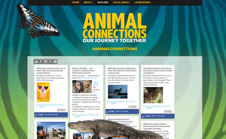 Follow #AnimalConnections happenings on the aggregated social media feed at http://www.animalconnections.com, created by the Smithsonian Institution Traveling Exhibition Service